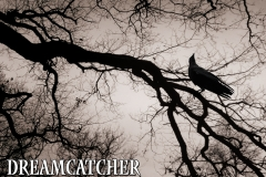 Dreamcatcher 1er album Pochette Digipack
